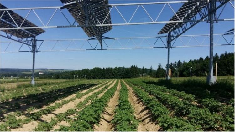 Zonnepanelen boven een aardappelveld.